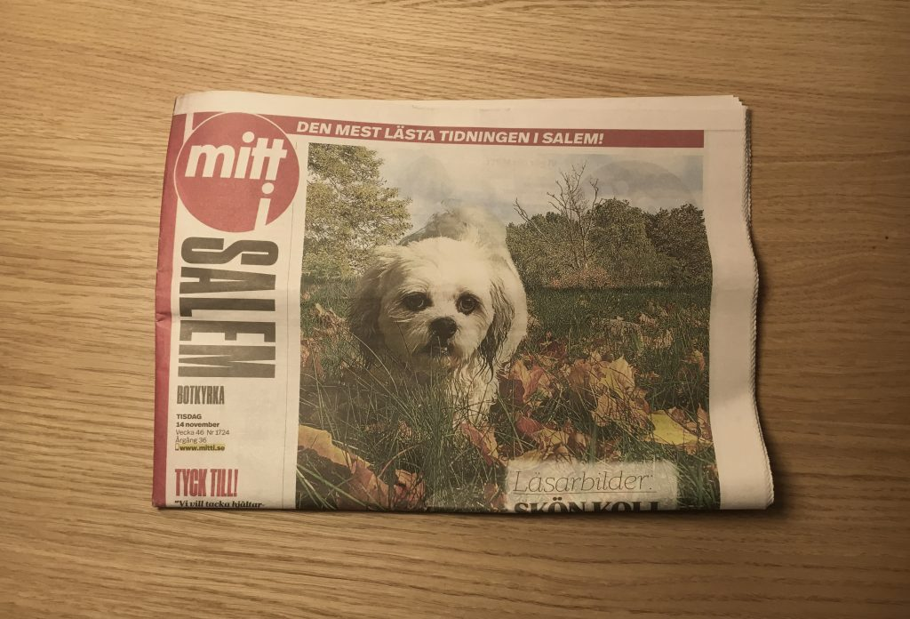 Cute dog on newspaper front page.